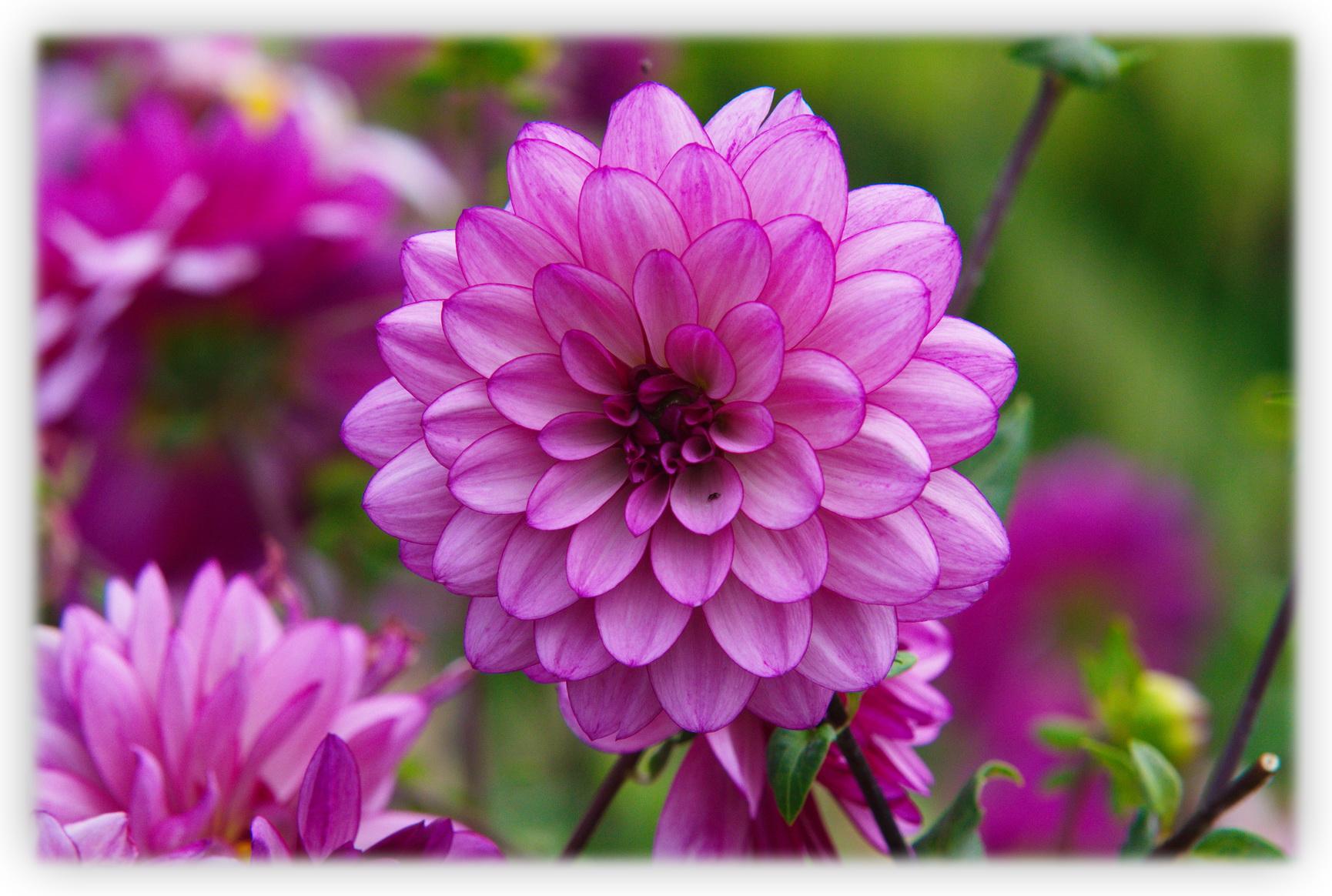 Fleurs Les Beaut S De Montr Al