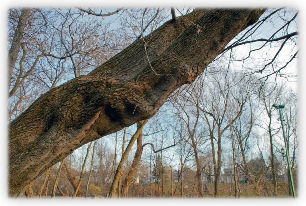 Meurtrissures, cicatrices, blessures, les arbres ne sont exemptés des heurts de la vie et de la main humaine