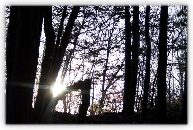 Parcourir en randonnée une forêt écologique et constater à quel point par une obscure volonté humaine cette forêt est abimée