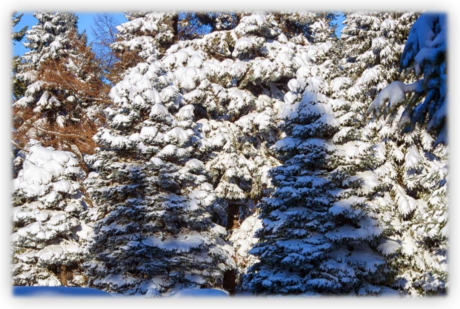 Il pourrait encore neiger ces prochains jours