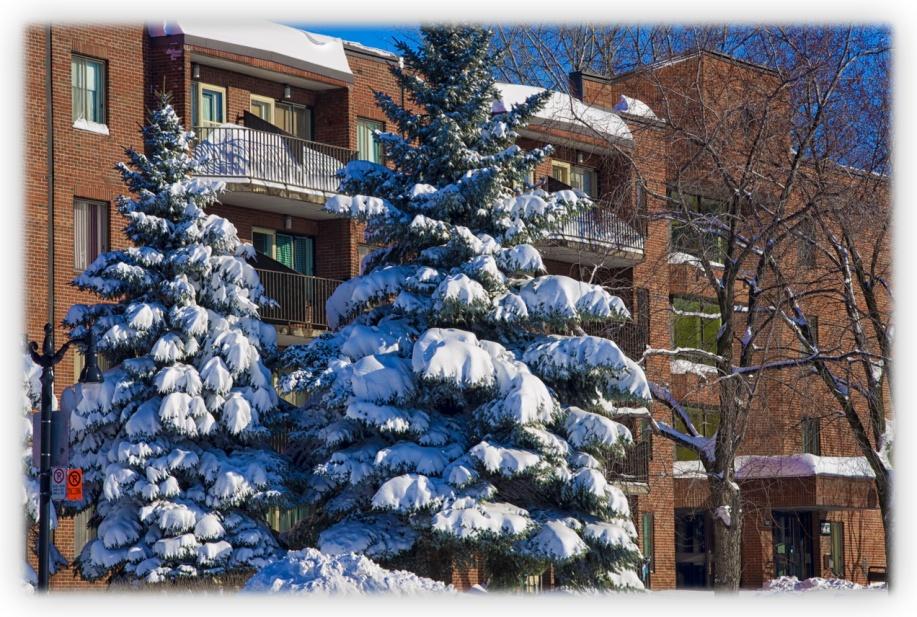 les 45 cm de neige