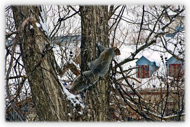 Sam, le guetteur, veille tapi dans un arbre...