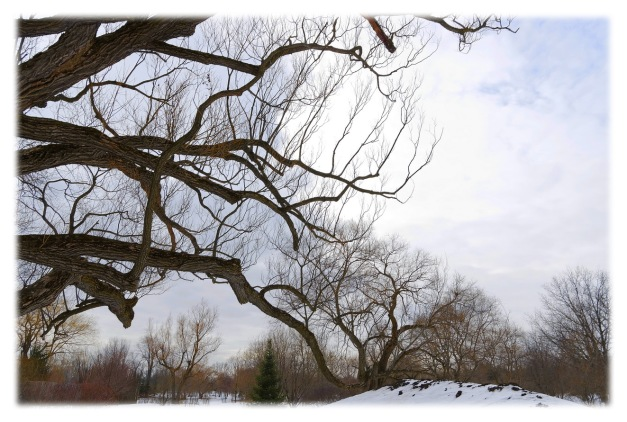 Le jardin des arbres aux cent courbures