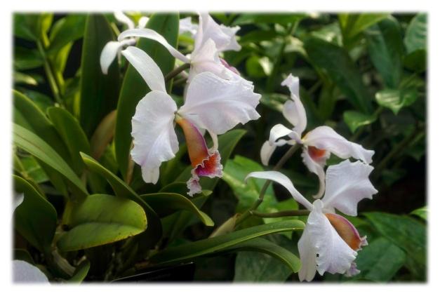 Orchidée du samedi