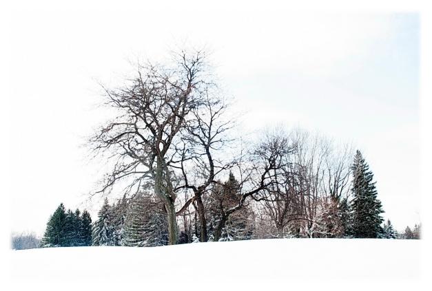 Pensées d'hiver__001