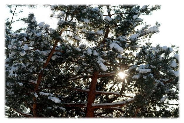 Pensées d'hiver__002