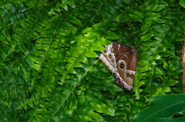 Lorsque je lis ou j'entends : « la chasse aux papillons », je frémis d'horreur. Pourquoi les chasser? Il suffit de les aimer