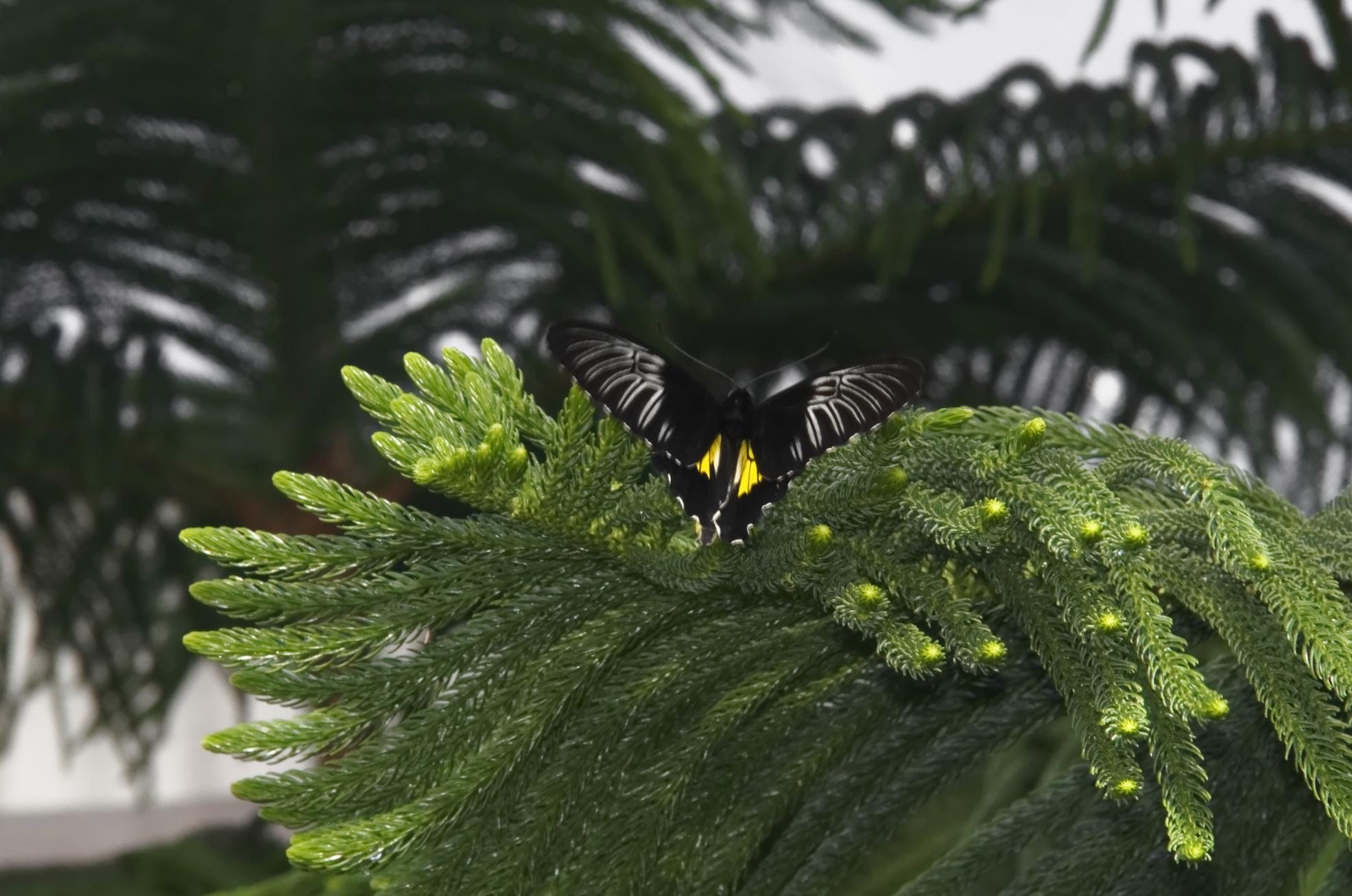 Les papillons de l hiver les beaut s de montr al for Jardin botanique montreal papillons 2016