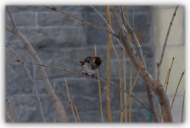 Le petit oiseau du printemps