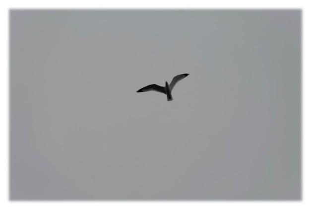 Le temps gris de mars__002