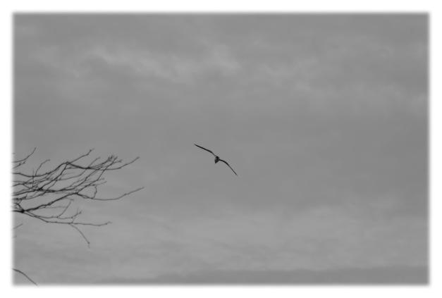 Le temps gris de mars__003