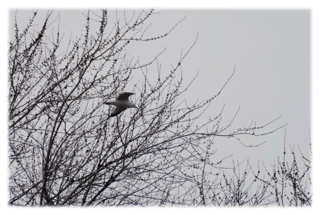 Le temps gris de mars__004