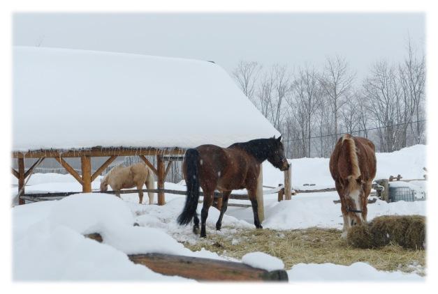 Un enclos dans la neige
