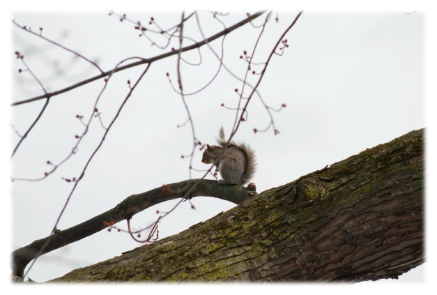 Sam l'écureuil fait le dos rond